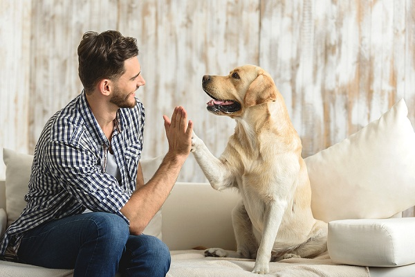 dog-high five with human