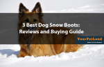 3-Best-Dog-Snow-Boots-Reviews-and-Buying-Guide