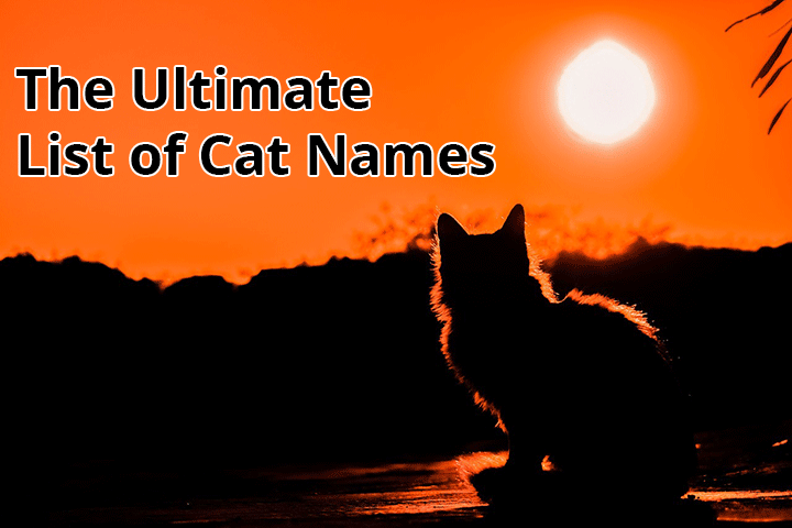 ultimate list of cat names
