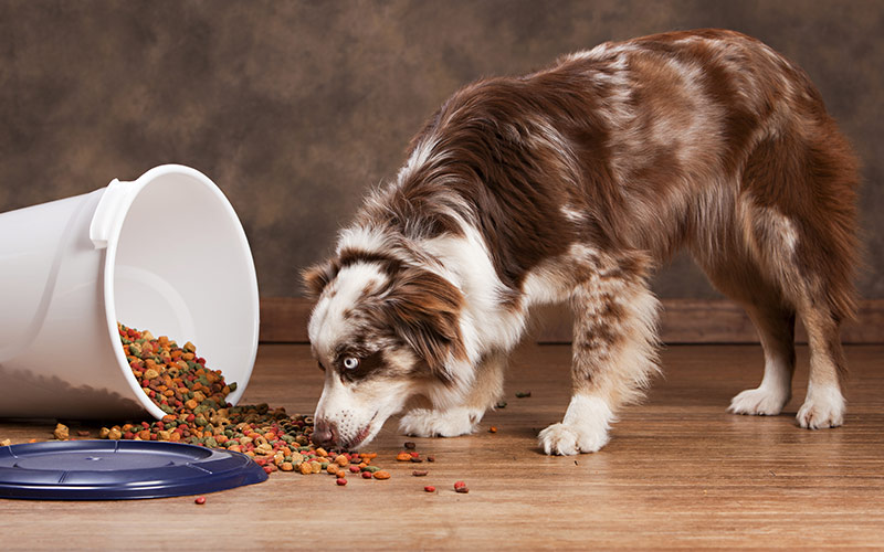 a dog smelling the dog food spilled over