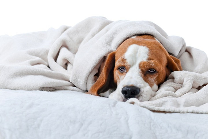 How To Prevent Dog Poisoning Ultimate Guide Article