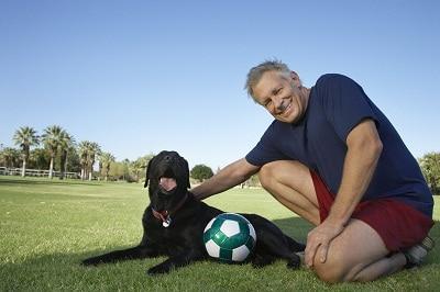 Dog-training-collar