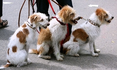 Best Way To Train Dog To Walk On Leash