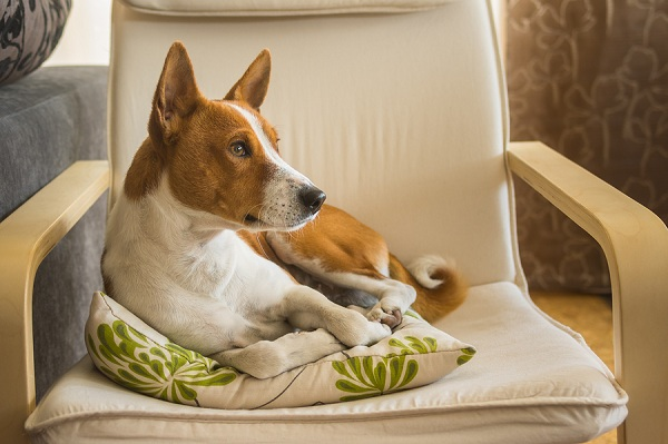 How-To-Help-A-Dog-In-Separation-Anxiety
