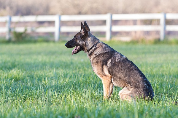 petsafe-wireless-dog-fence