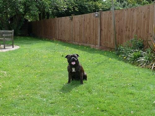 Review On Petsafe Wireless Fence Pif 300 With 2 Extra