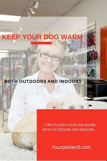 Keep-Your-Dog-Warm