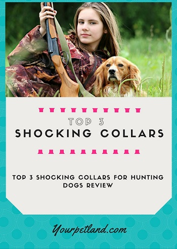Shocking-Collars-for-Hunting-Dogs-Review