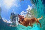 10R-Bark-Control-Collar-waterproof