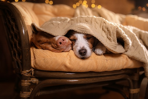 Top 3 Dog Heating Pads You Need Note Down In Your Note Books