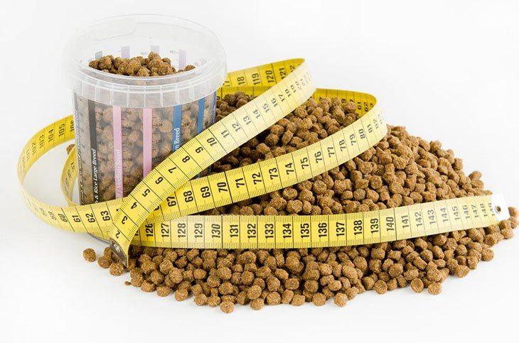 How Many Cups Dog Food  Pound Dog
