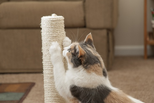 Pioneer-Pet-Scratching-Post