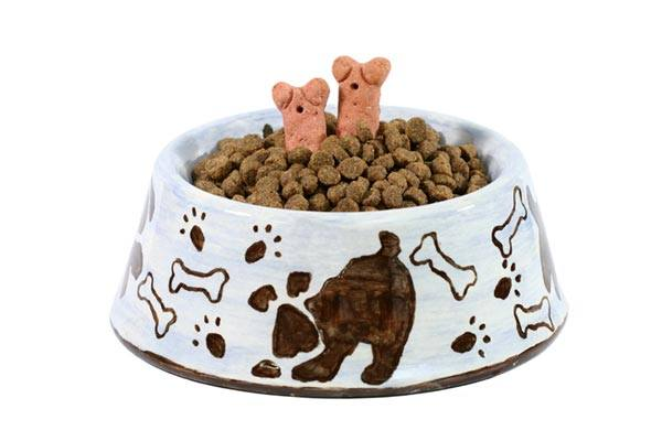 Can Dry Dog Food Expire