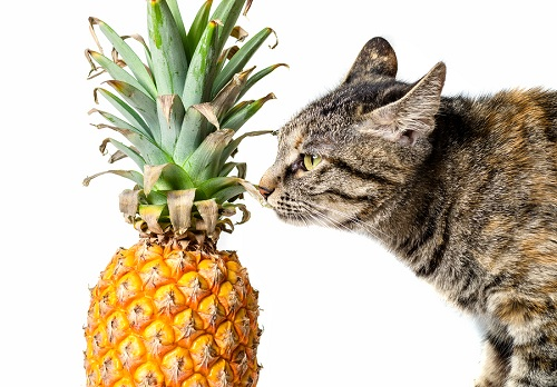 Fresh pineapple and cat on white isolated background