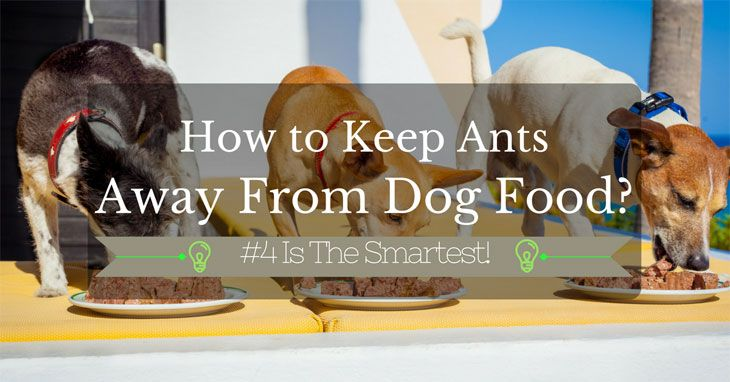 7 Easy And Effective Methods On How To Keep Ants Away From