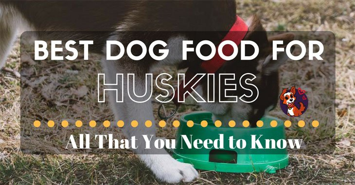 The 5 Best Dog Food For Huskies All That You Need To Know
