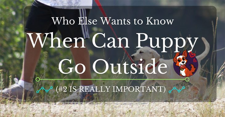 Who Else Wants To Know When Can Puppy Go Outside 2 Is