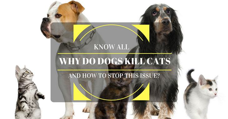 Why Does My Dog Kill Cats And How To Stop This Issue
