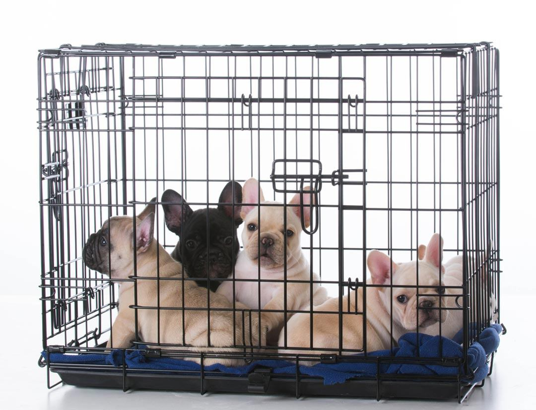 How To Train Puppy Mill Dogs