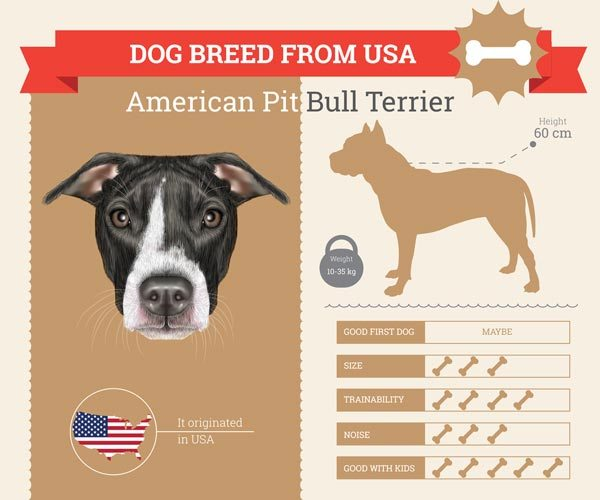 American Natural Dog Food Review