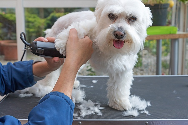 How-to-Use-Dog-Clippers