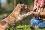 Teach-Dog-Give-Paw