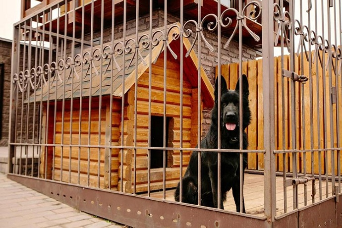 dog-in-his-kennel
