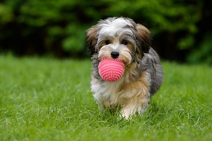 teach-dog-to-fetch
