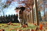 Prevent-Dog-Poisoning
