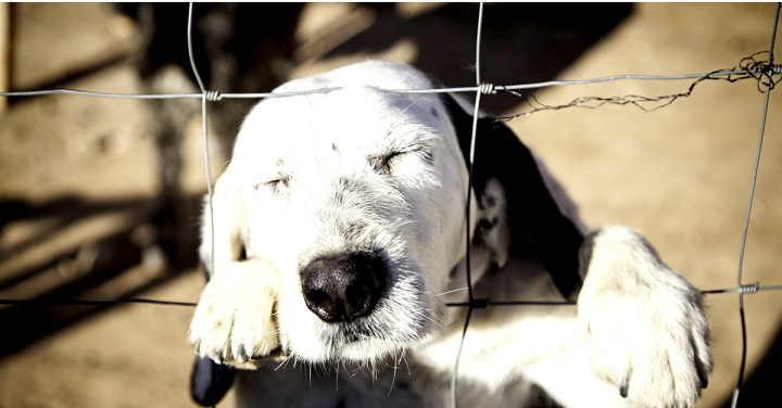 Chain-Link-Dog-Fence