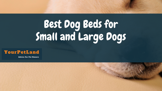 Best Dog Beds for Small and Large Dogs