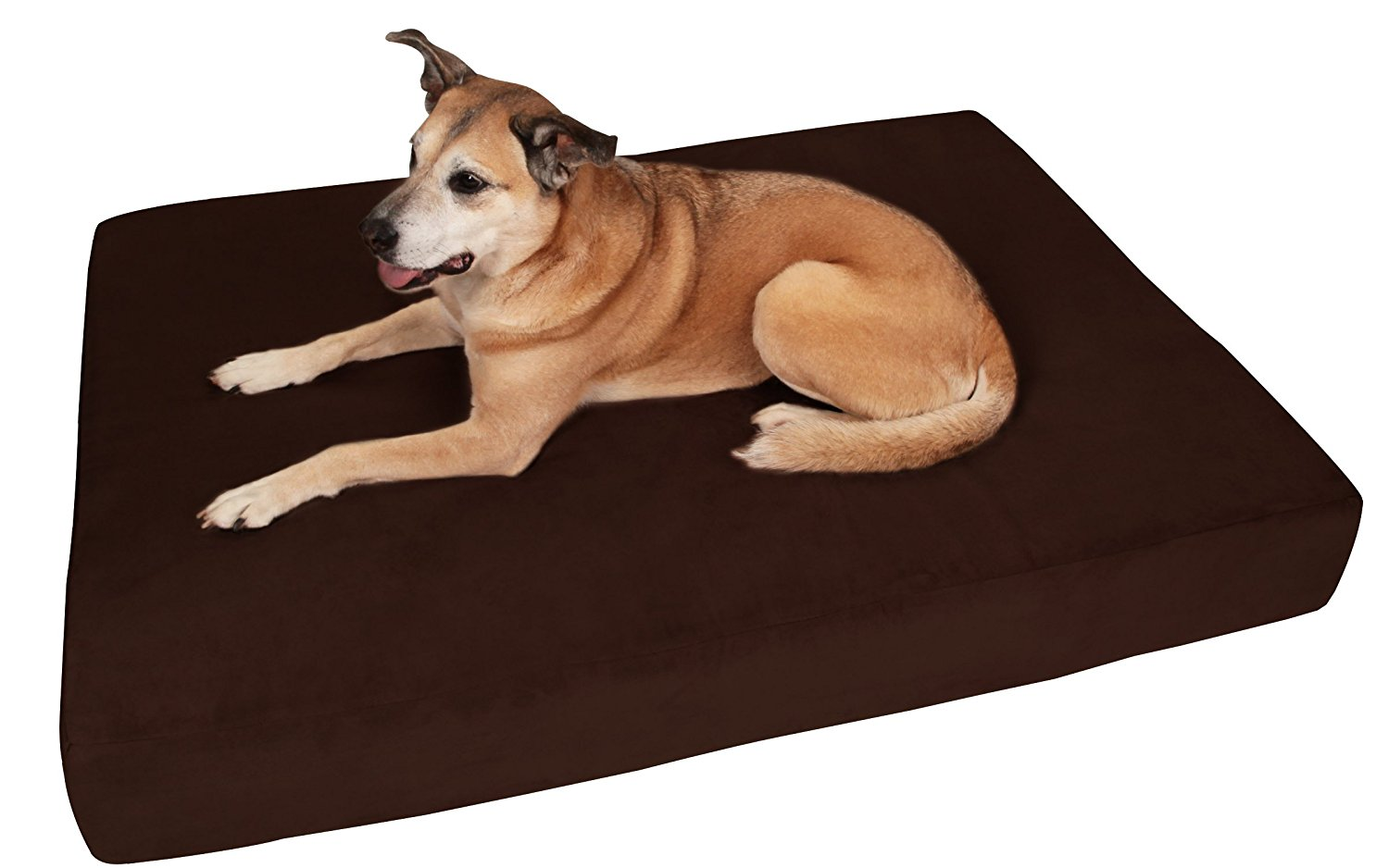 Big Barker best dog beds