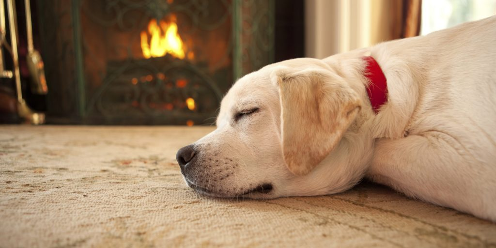 a labrador dog sleeping near the fireplace