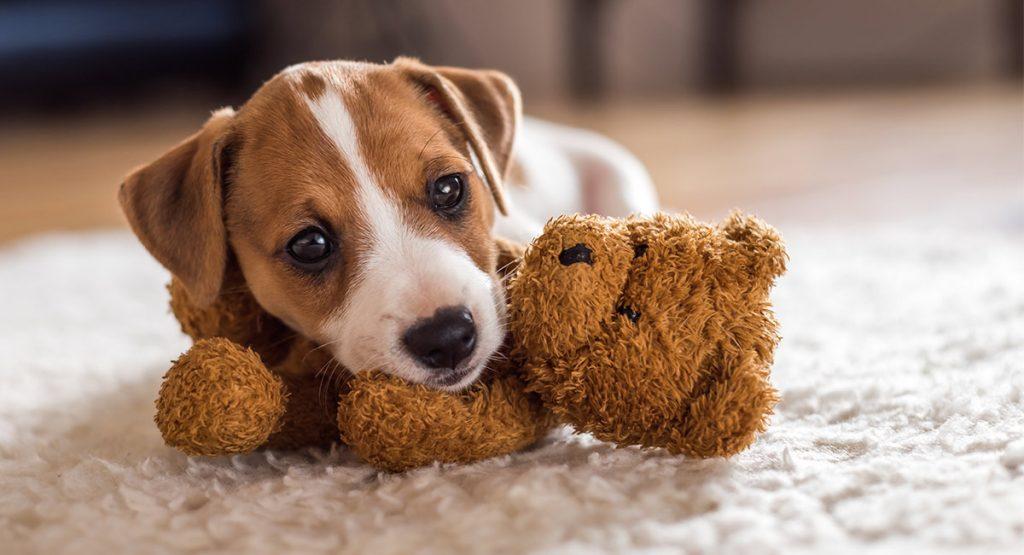 small dog names img
