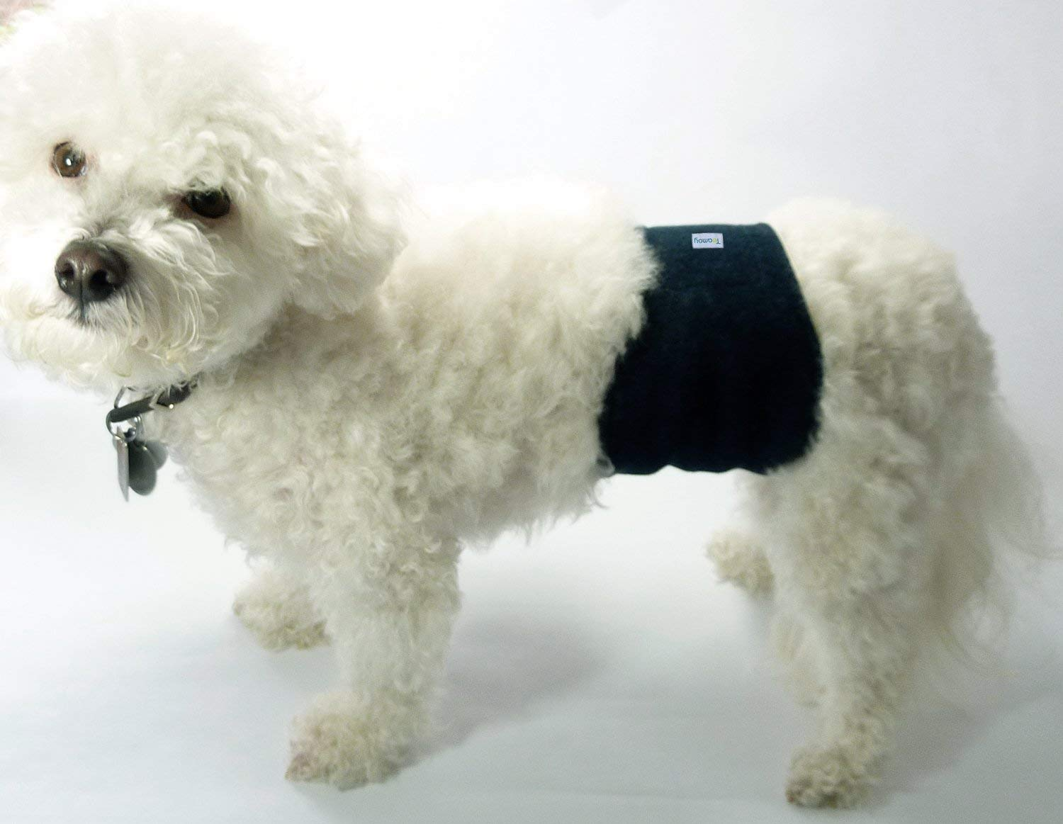 a white puppy wearing a diaper for male