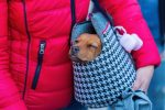 photo of a dog inside a dog carrier carried by her owner