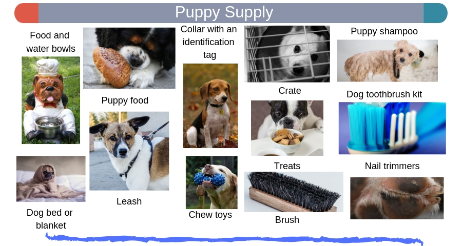Puppy Supply needs for your pets