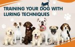 Training Your Dog with Luring Techniques Featured Image