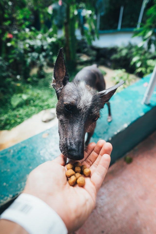 Man feeding dog with dry dog food on the palm of his hands