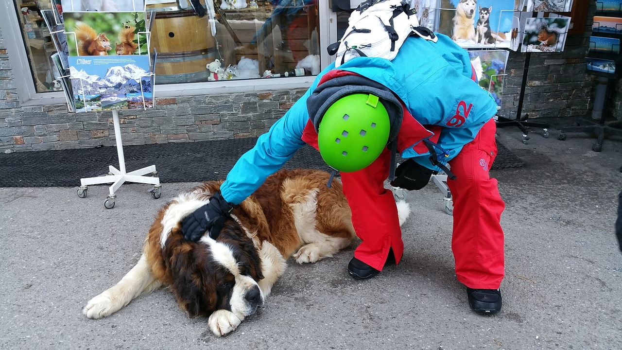 a man gently patting the back of a st. Bernard dog, a loyal dog breed