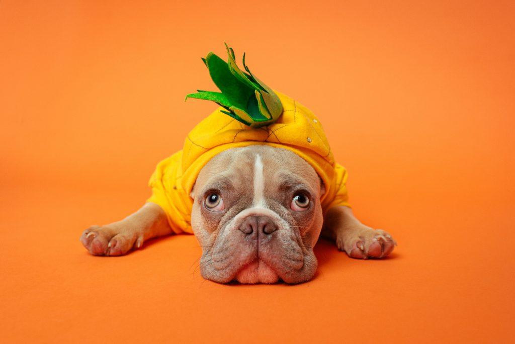 Pineapple Dog