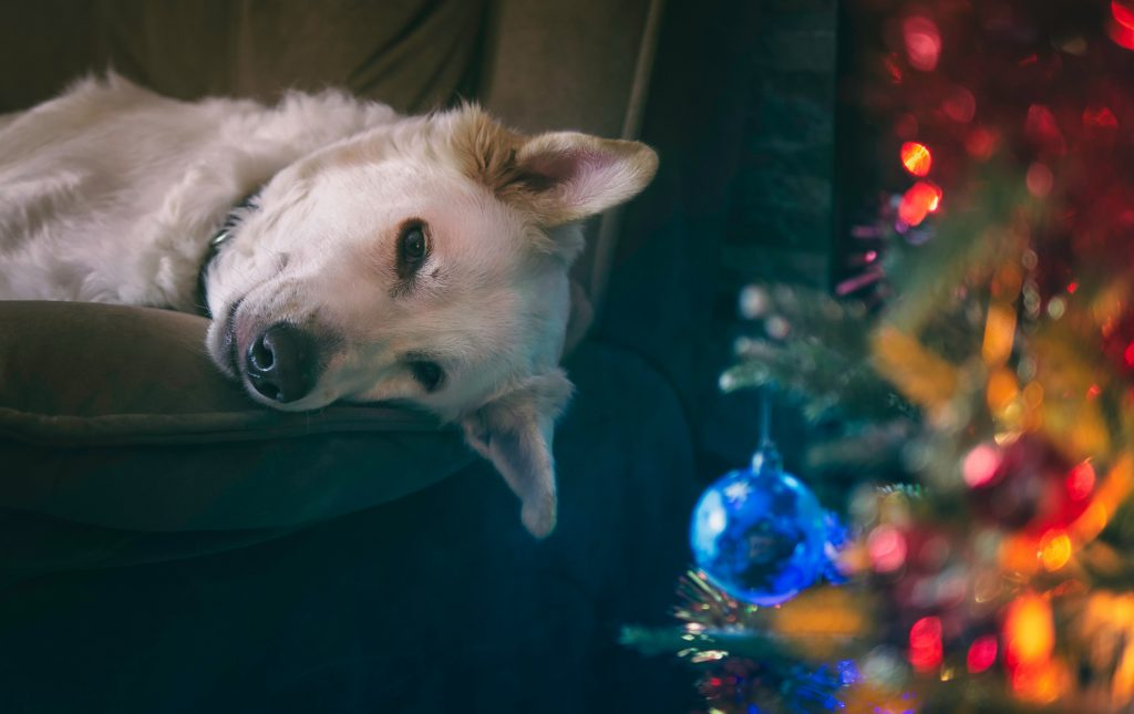 Best Pets for Christmas